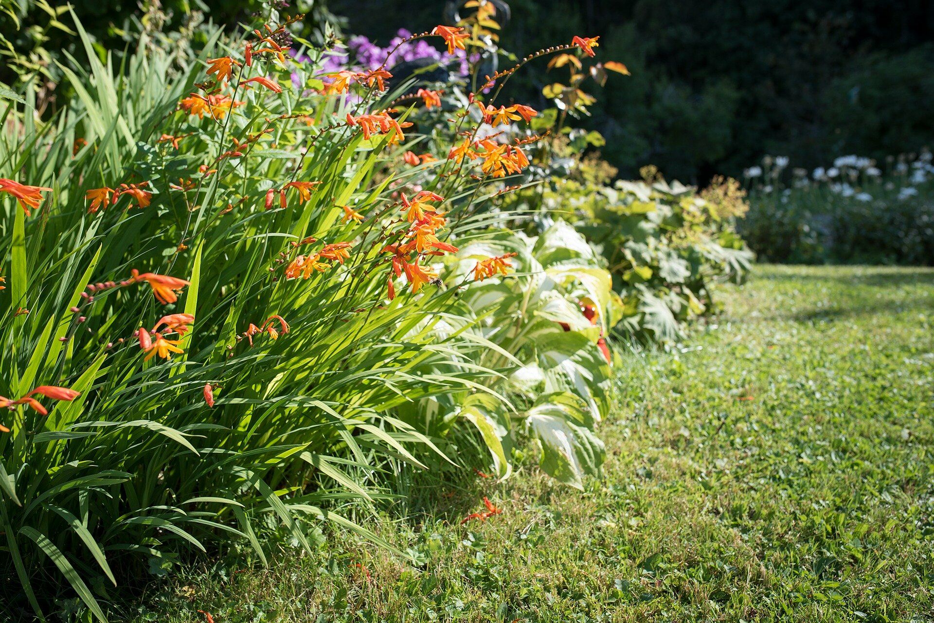 Maintain your garden in the summer